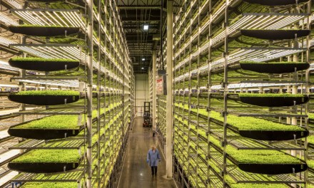 Vertical Farming: The Next Big Thing In Farming