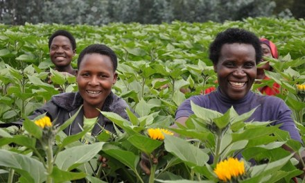 Cash generating export crops for Zimbabwe
