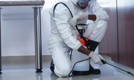 How to start a fumigation service in Zimbabwe