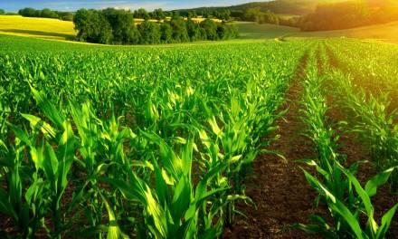 Top Crop Farming Business Ideas For Zimbabwe