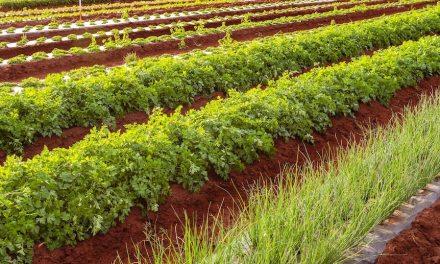 Profitable herb growing business ideas for Zimbabwe