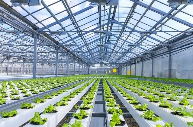 The best crops to grow in hydroponic systems