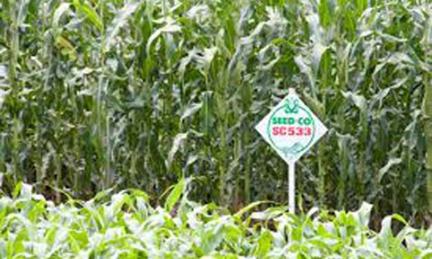 SeedCo is back on the ZSE; what happened?
