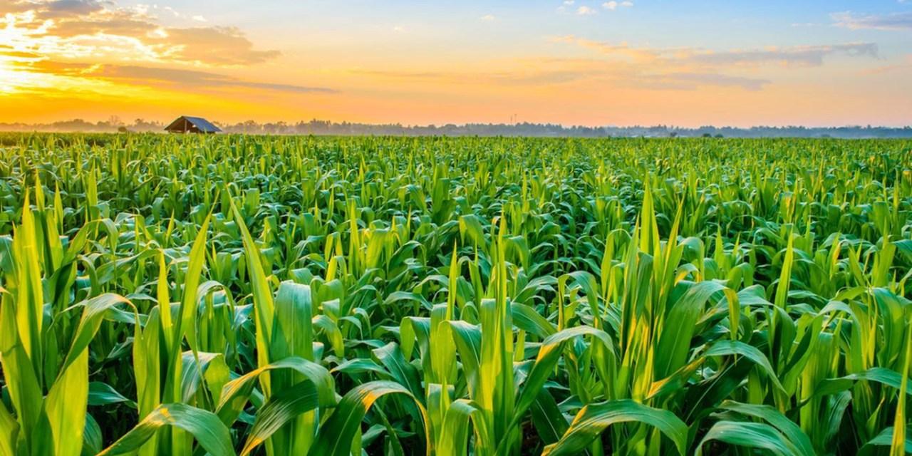 Nyaradzo Group Diversifies Into Agriculture
