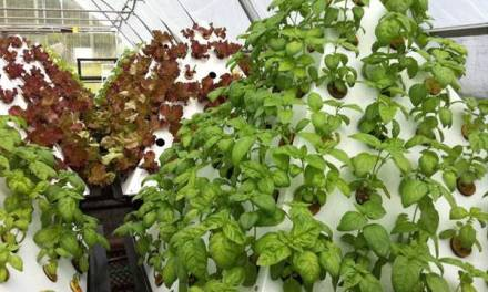 5 Types Of Crops That Do Not Need Lots Of Space