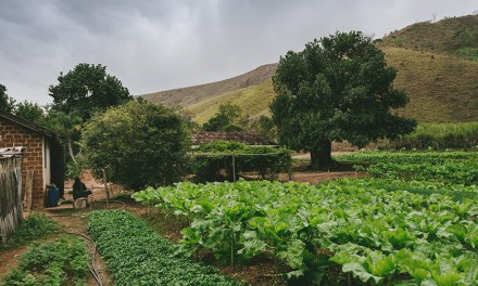 Smallholder Farmers Do Not Produce As Much As Reported