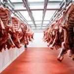 How To Start An Abattoir Business