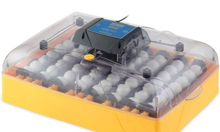 Top 10 Best Egg Incubators in 2020