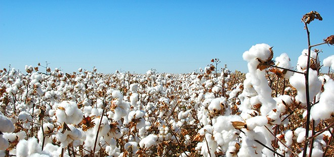 How To Start A Cotton Farming Business