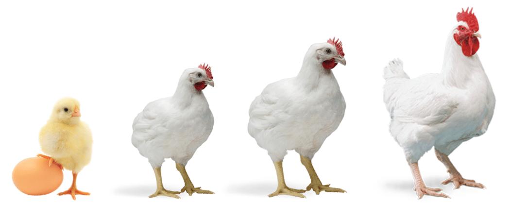 Profitable Poultry Farming Business Ideas