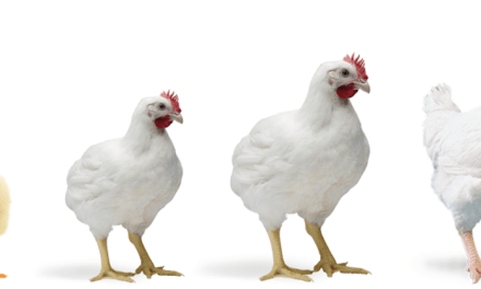Profitable Poultry Farming Business Ideas