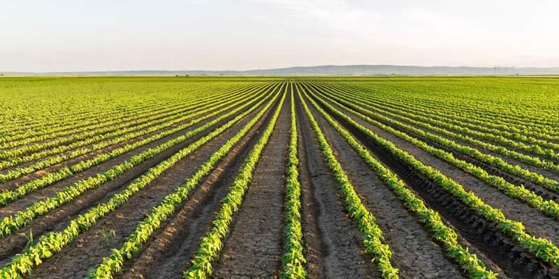 Profitable Crop Farming Business Ideas