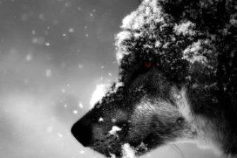 Wayne Gretzky wolf