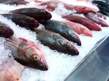 Fish Farming In Aquaculture
