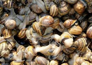 How To Start a Profitable Snail Farming Business