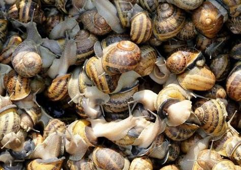 How To Start a Profitable Snail Farming
