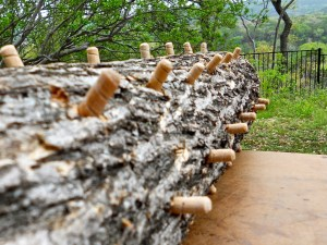 Spawning Mushrooms