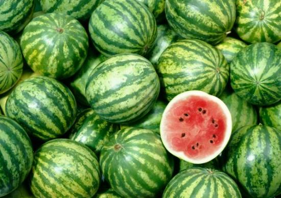 How To Start A Lucrative Watermelon Farming Business: The Complete Guide