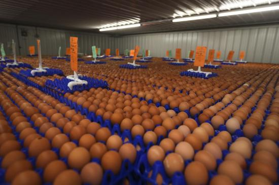 How To Start An Egg Supply Business In Nigeria | Egg Distribution Business In Nigeria