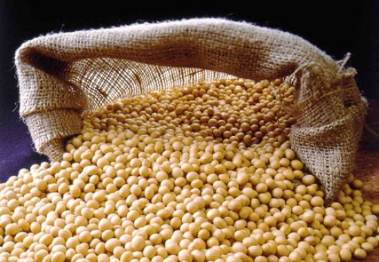 How To Start Soya Beans Farming In Nigeria: Soybeans Farming