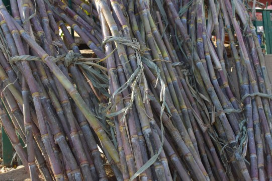 How to Start Sugarcane Farming In Nigeria