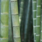 How To Start A Lucrative Bamboo Farming & Production Business In Nigeria: The Complete Guide