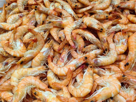How To Start Shrimp Farming In Nigeria Or Africa: Complete Guide