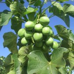 How To Start A Lucrative Jatropha Farming Business In Nigeria: The Complete Guide