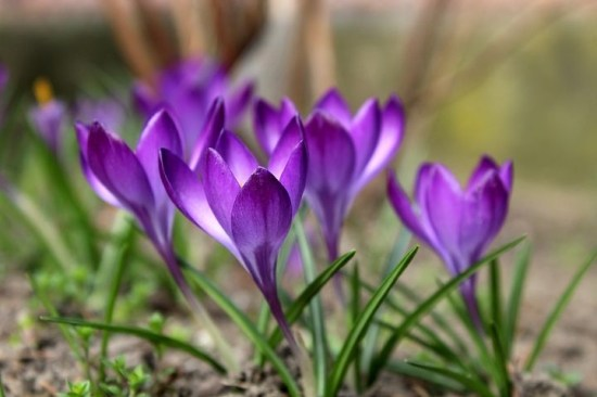 How To Start saffron farming Business in Nigeria or Africa: Complete Guide