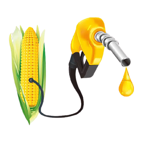How To Start Biofuel Production Business in Nigeria or Africa: The Guide