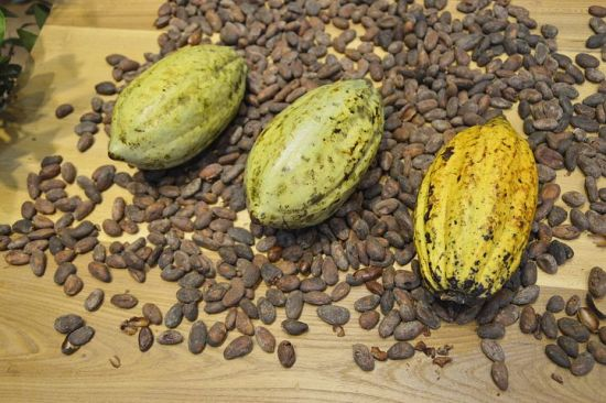 How To Start Cocoa Farming Business In Nigeria: Complete Guide