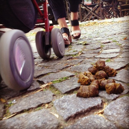 Dog poop as you stroll by