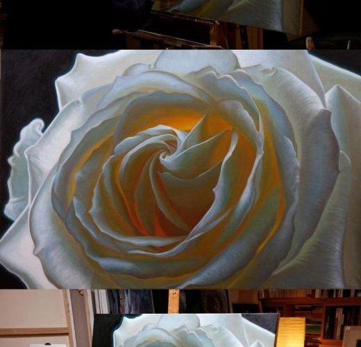 Oil painting of a white rose, by artist Vincent Keeling www.vincentkeelin……
