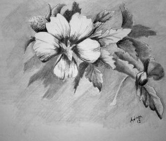 Beautiful Sketches of Flowers   Beautiful Pencil Drawings Of Flowers Pencil sket…