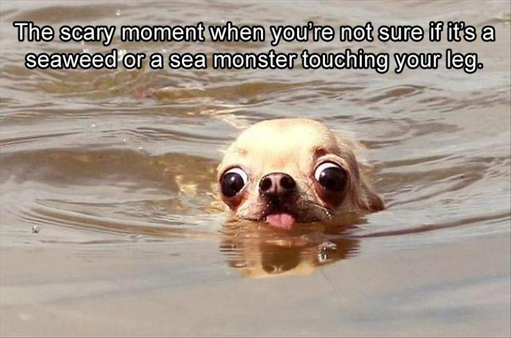 Funny Animal Pictures Of The Day – 22 Pics