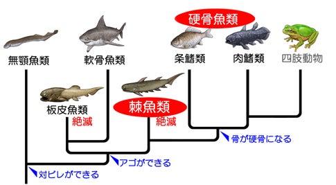 棘魚~ベンチャースピリットな魚たち   川崎悟司 オフィシャル ...