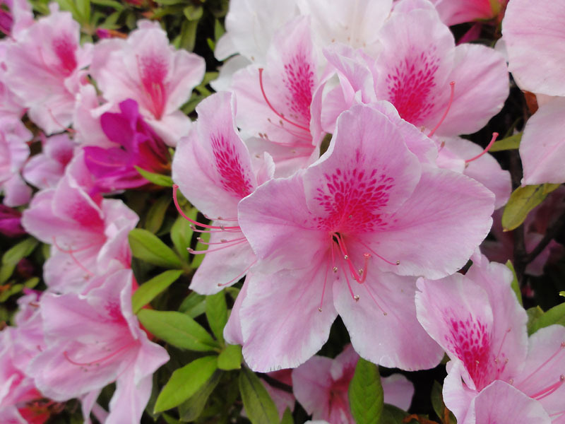 5月の花 | 日々是好好