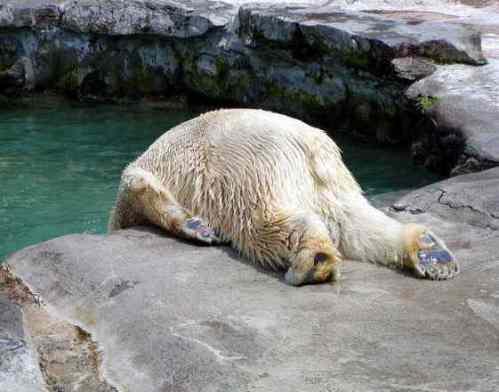 「北海道 暑い」の画像検索結果