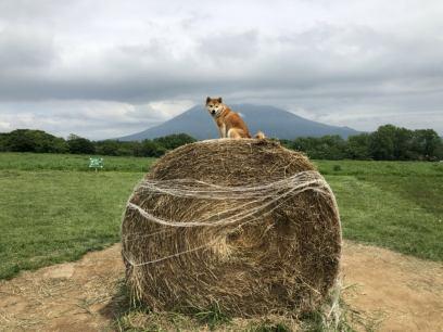 「牧草ロール」の画像検索結果