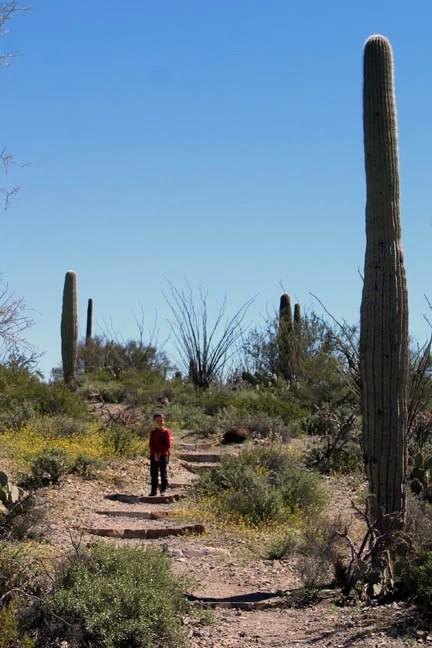 hiking amoung the cacti