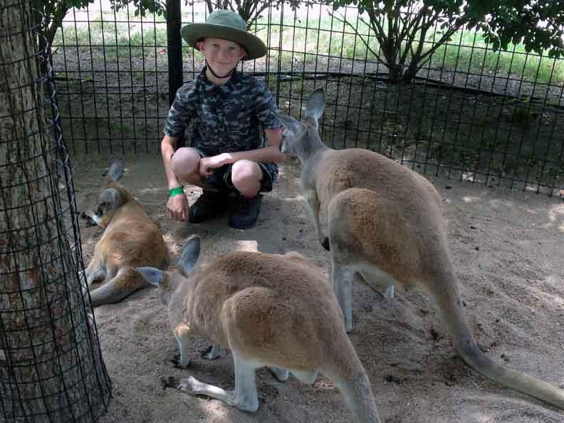 Miles-and-three-kangaroos-
