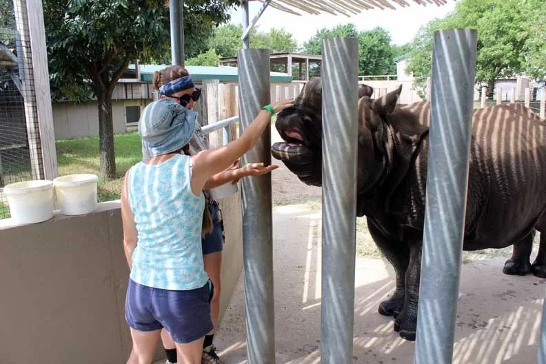 A woman petting a rhino on the nose