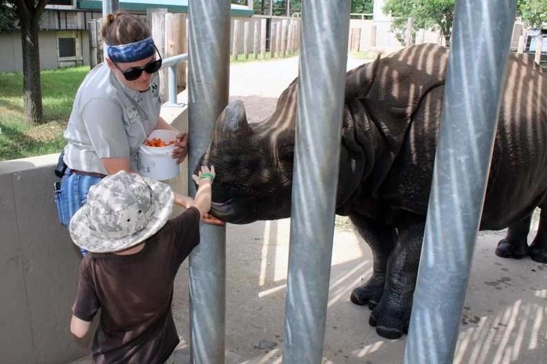 a little boy petting a rhino