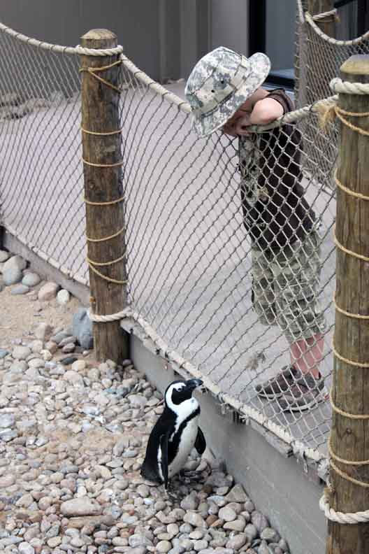 a boy looking at a penguin and the penguin looking back