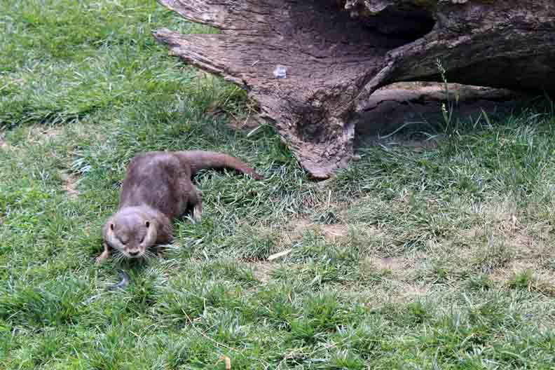 an otter