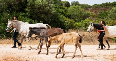 Horsewalk with rescued horses and foals