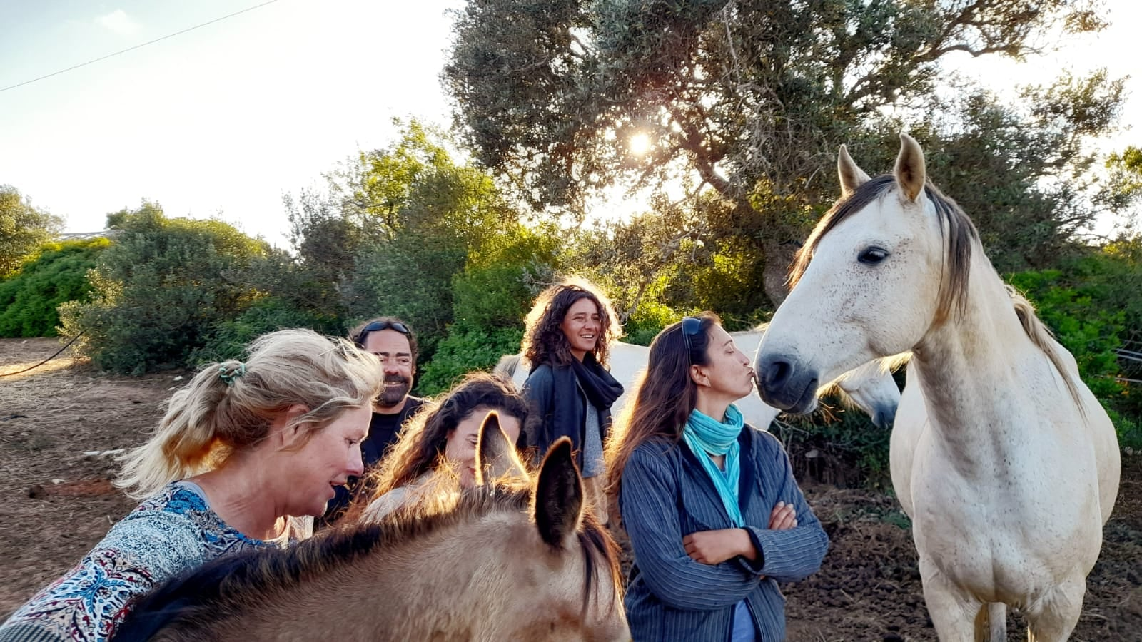 State of being - rescued horses