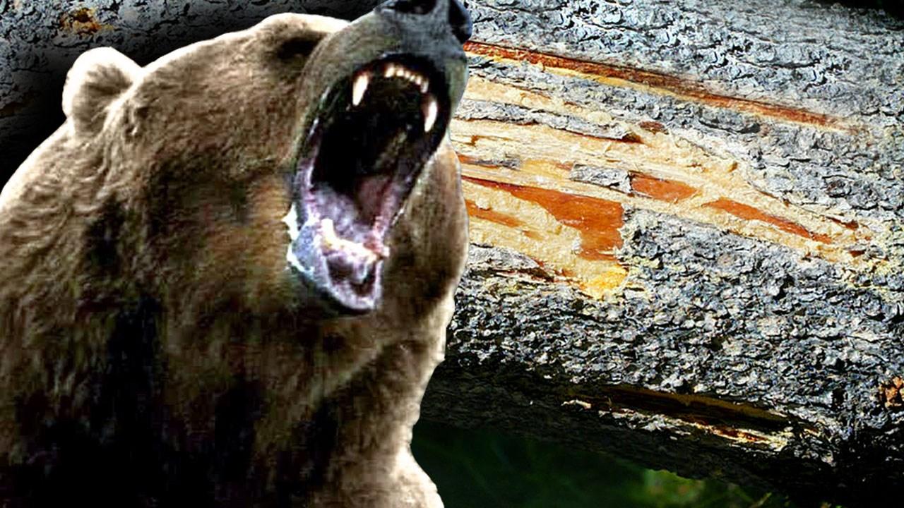 Image result for man killed selfie bear india