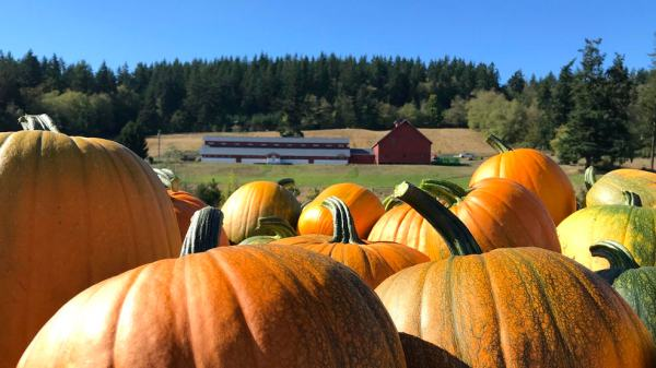 Grab That PSL and Head To One of These Pumpkin-Inspired Events