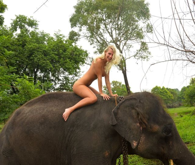 Happy Blonde Babe Awkwardly Riding An Elephant Porn Pic Eporner